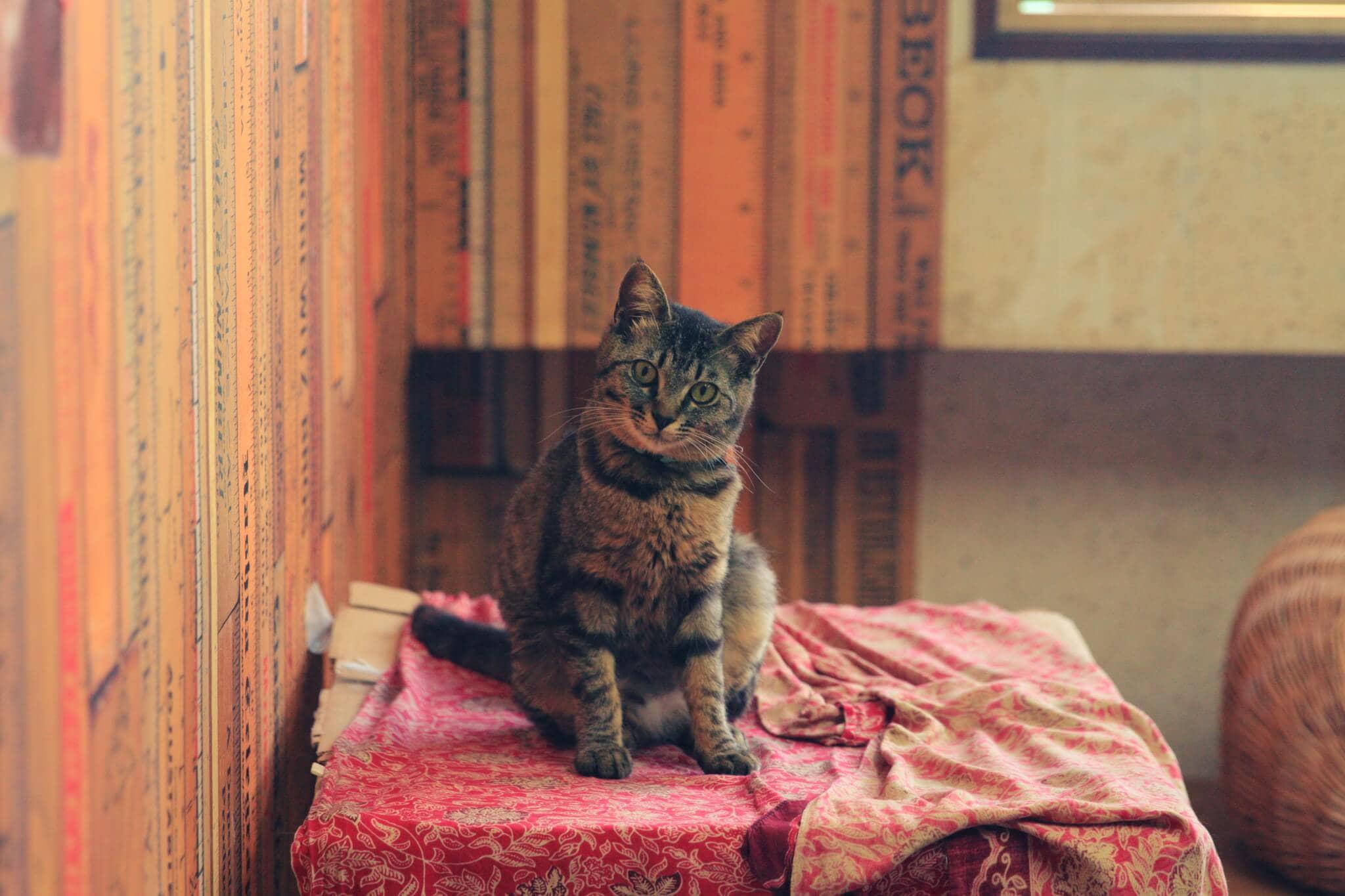 猫に関する困りごとイメージ