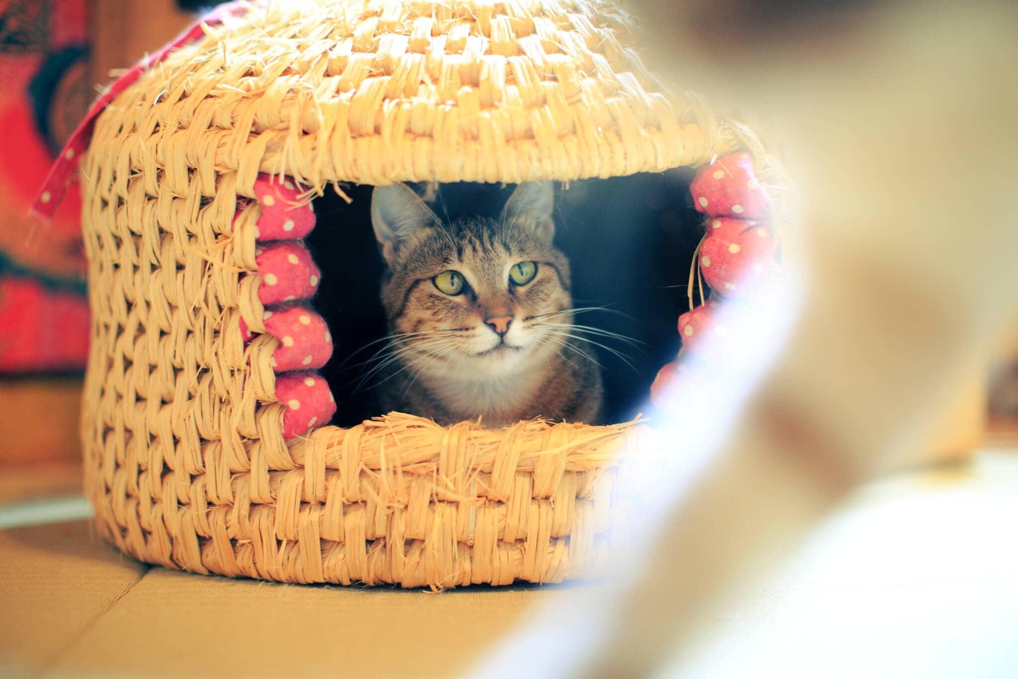保護猫イメージ