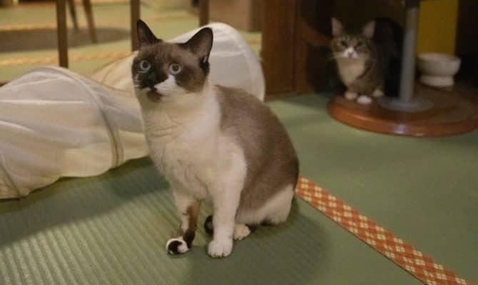 猫団子になってヌクヌク