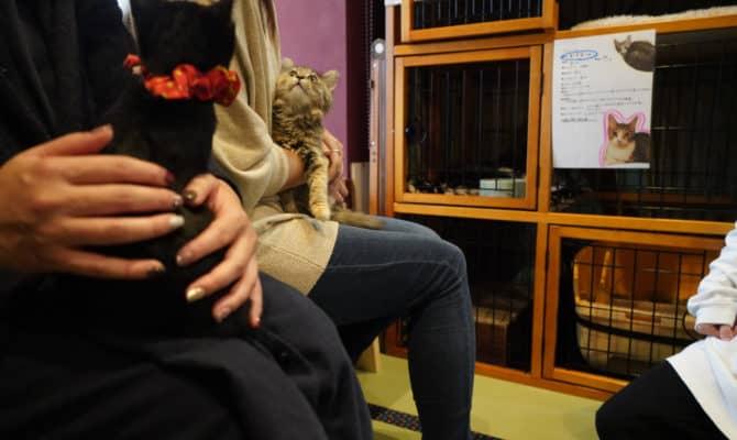 保護猫譲渡会を開催しました!