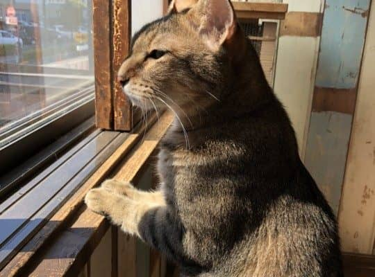 大好きな人と別れることになった猫たちのお話 その1 たけ