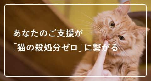 あなたのご支援が「猫の殺処分ゼロ」に繋がる