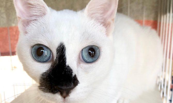 保護猫譲渡会@ネコリパストア蔵前店