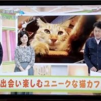 大阪ねこ浴場&ねこ旅籠が、NHK ウィークエンド関西に特集されました!