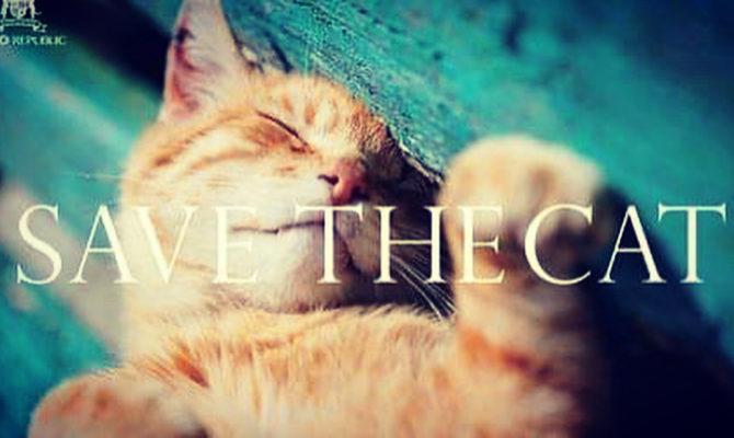 2月22日は猫の日、猫に感謝をする日、猫孝行する日。
