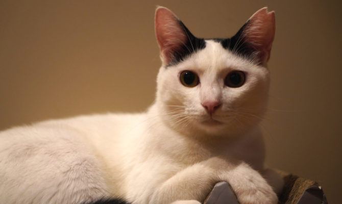 美猫のおみっちゃん