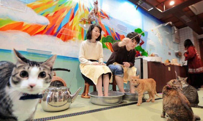 毎日新聞さんに大阪店ねこ浴場が取材されました!
