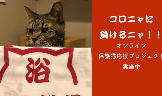 コロニャに負けるニャ!!第3弾! オンライン保護猫カフェ応援プロジェクト開催中