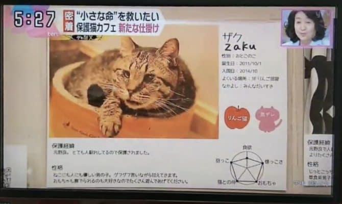 関西読売テレビ「ten」で、ネコリパブリックの活動を密着取材していただきました。