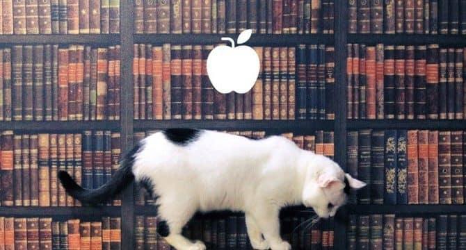 りんご猫について