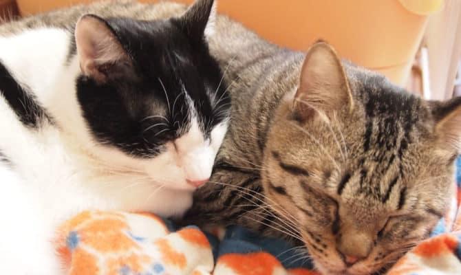 愛すべきネコリパの看板猫のお話 その1 ザクとオレオ