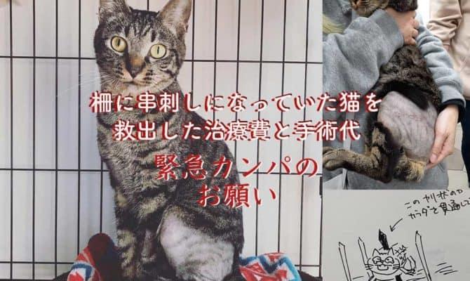 緊急カンパのお願いです!柵に串刺しの猫を救出!その治療費と手術代カンパ募集