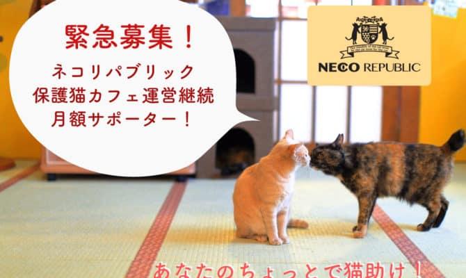 緊急募集!ネコリパブリック運営継続月額サポーター!あなたのちょっとで猫助け!