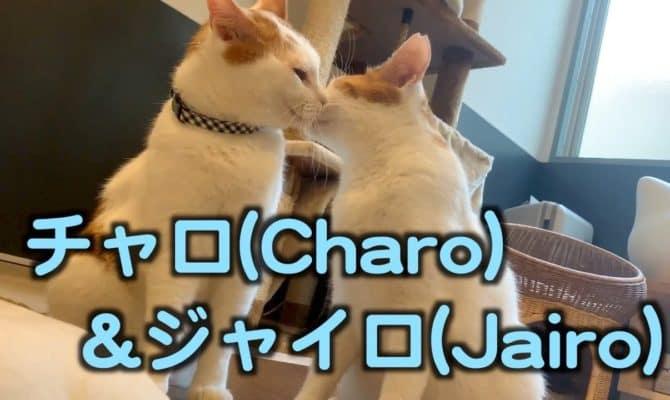 仲良し兄弟!チャロ&ジャイロ特集