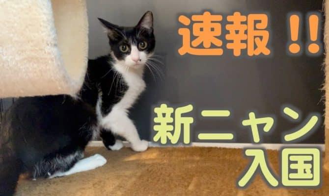新ニャン入国速報【おはぎ&はるか&彩花&チャイロ&モカ】