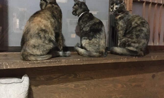 さびs 三姉妹