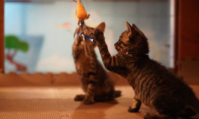 子猫だらけの譲渡会!