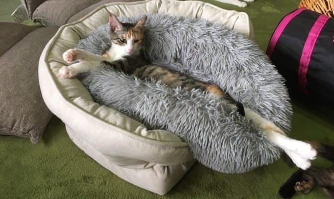 贅沢なベッドの使い方