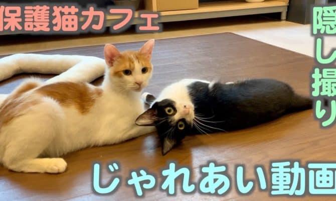 じゃれあい動画【おはぎ&チャイロ】
