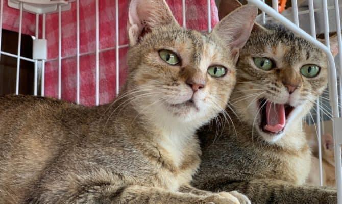 バンビ&ポーラ、仲良し姉妹のトライアルスタート!