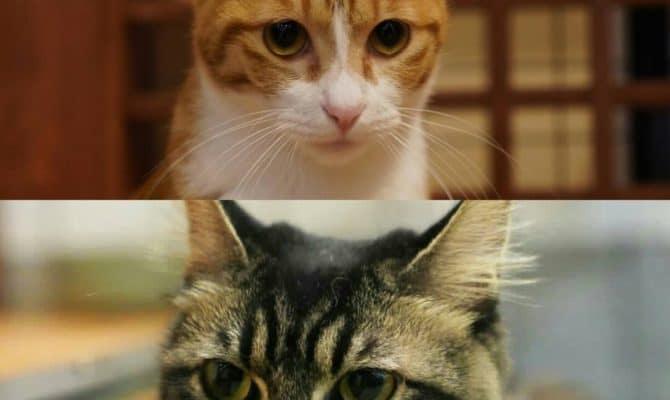 マスク&ふわ【トライアル決定】