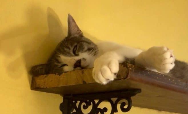 とと丸の寝顔