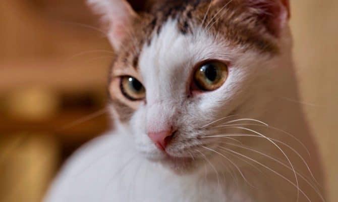 美猫ミギちゃん