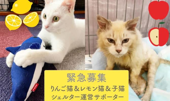 りんご猫&レモン猫&子猫シェルター運営サポーター緊急大募集