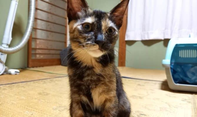 サビ猫フィービー