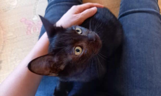 黒猫チャンドラー