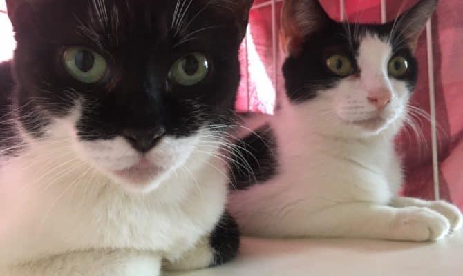 なかよし姉妹 パンジー&ソフィア