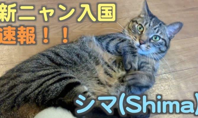 新ニャン入国速報【シマ】