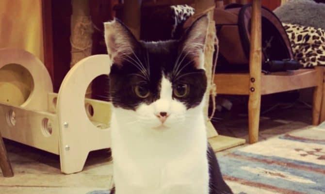 保護猫 預かりボランティア大募集