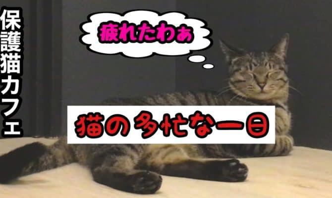 猫の多忙な一日中【ロイズ】