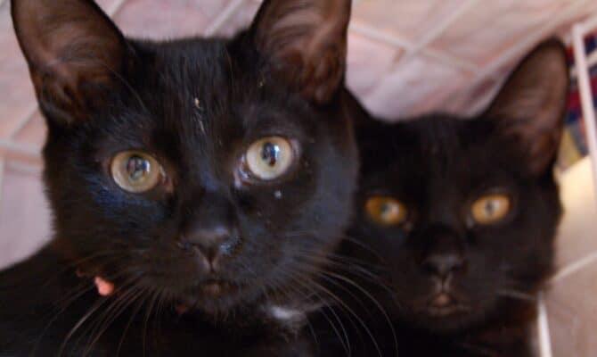 【黒猫姉妹トライアルへ】