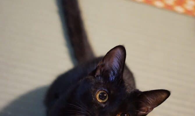 黒猫姉妹💕トライアルが決まりました✨