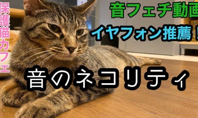 音フェチのための猫動画
