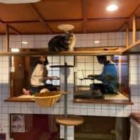 保護猫をまったり愛でながらテレワークできる、「猫旅籠(はたご)ワーク」サービススタート
