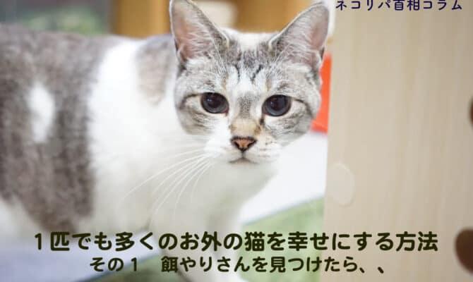 1匹でも多くのお外の猫を幸せにする方法 その1 餌やりさんを見つけたら、、