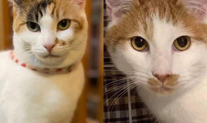 新猫さんのご紹介🐾