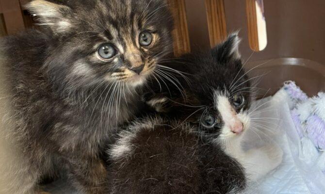 1匹の猫を救うのに必要なお金ってどれくらい?