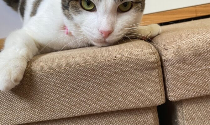 新猫さんのご紹介♪