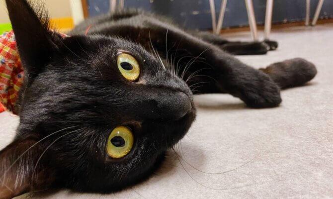 新猫さんのご紹介🐈⬛