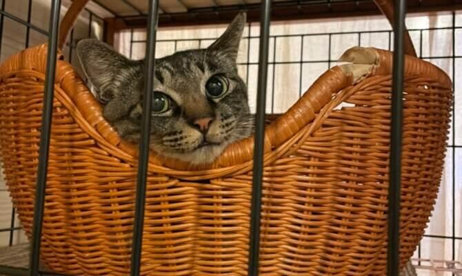 猫嫌いの猫・アリエル