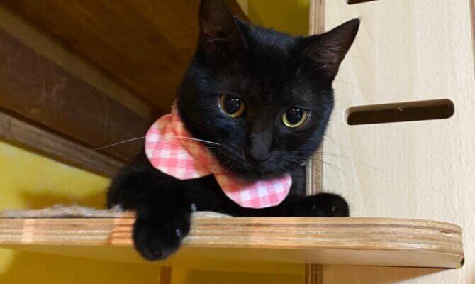 【ひのき&たんぽぽ黒猫ペアが卒業😺】