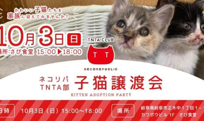 10月3日 日曜日は 子猫譲渡会@さび食堂