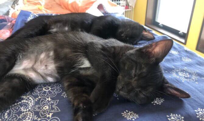 黒猫姉妹🐾トライアル決定🎉