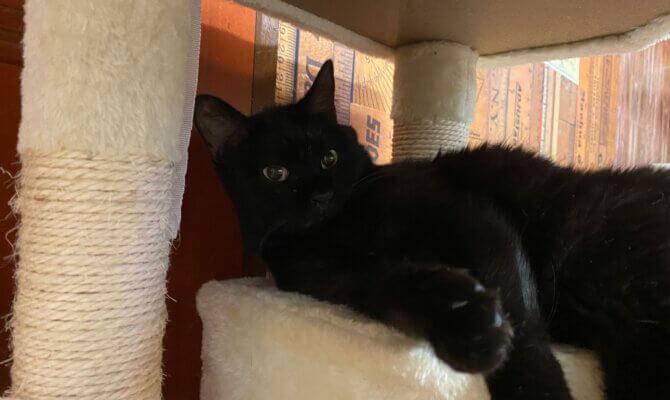 黒猫いっぱい